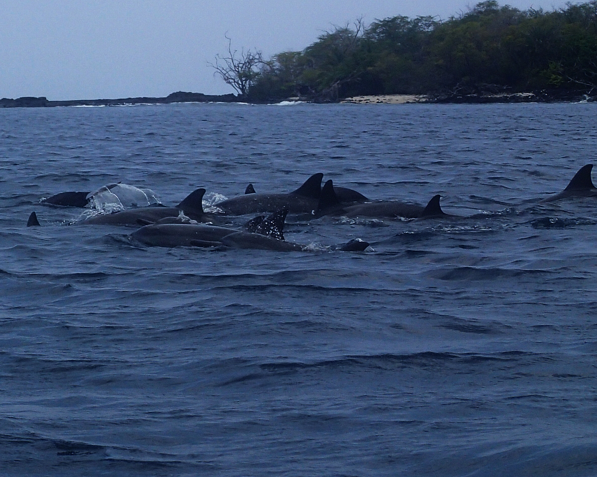 Dolphin Home Stay Bali Indonesia